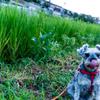 my pretty dog # 24