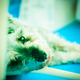 my pretty dog # 17