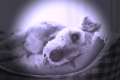 my pretty dog # 243