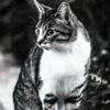 吾輩は猫である、ニャー # 28