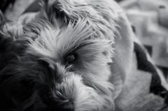 my pretty dog # 143