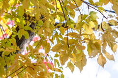 黄葉いろいろ