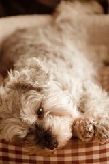 my pretty dog # 184