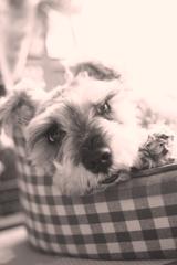 my pretty dog # 237