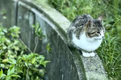 吾輩は猫である、ニャー # 259