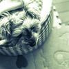 my pretty dog # 116