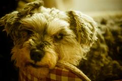 my pretty dog # 142