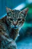 吾輩は猫である、ニャー# 58