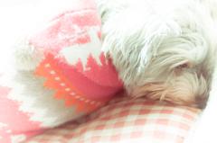 my pretty dog # 133
