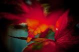 錦繍の秋 ⑪