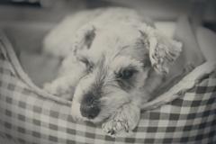 my pretty dog # 247