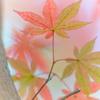 パステルな紅葉 ⑤