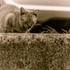 吾輩は猫である、ニャー # 61