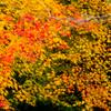 錦繍の秋 ③