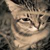 吾輩は猫である、ニャー # 54