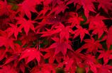 錦繍の秋 ⑨