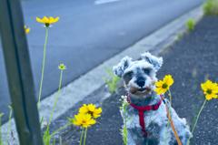 my pretty dog # 210