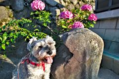 my pretty dog # 261