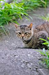 吾輩は猫である、ニャー # 297