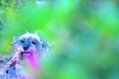 my pretty dog # 181