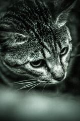吾輩は猫である、ニャー # 20