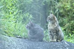 吾輩は猫である、ニャー # 234