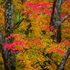 錦繍の秋 ②