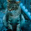 吾輩は猫である、ニャー # 57