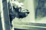 my pretty dog # 61