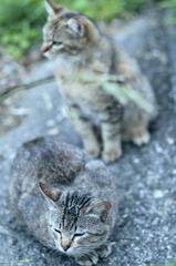 吾輩は猫である、ニャー # 237