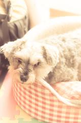 my pretty dog # 141