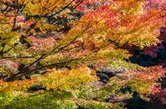 グラデーションな紅葉