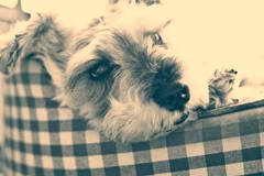 my pretty dog # 238