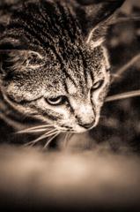 吾輩は猫である、ニャー # 19