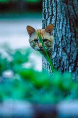 吾輩は猫である、ニャー # 45