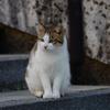 吾輩は猫である、ニャー # 77
