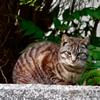 吾輩は猫である、ニャー # 83