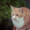 吾輩は猫である、ニャー # 24
