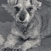 my pretty dog # 31