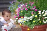 お花キレイ?