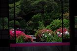 梅雨前の庭園