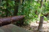 竹林の春は通り過ぎて