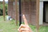 この指とーまれ!