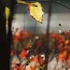 Familiar autumn Ⅱ