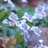 Spring of my garden Ⅰ
