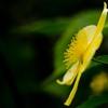 Flowers shining