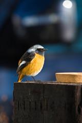 Visitor ~ pretty wild bird ~