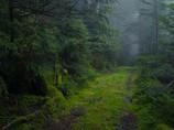 Rainy North Yatsugatake Forest Ⅰ
