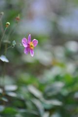 Discreet ~ ひかえめな花 ~