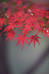 09年底最后的红叶